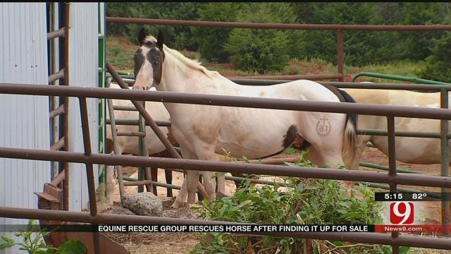 Horse Found Abused Again After Adoption