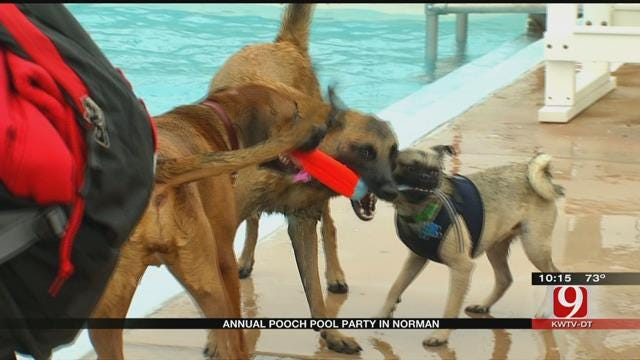 Dogs Play At Norman Pool Party
