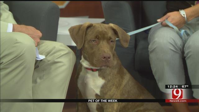 Pet Of The Week: Meet Eli