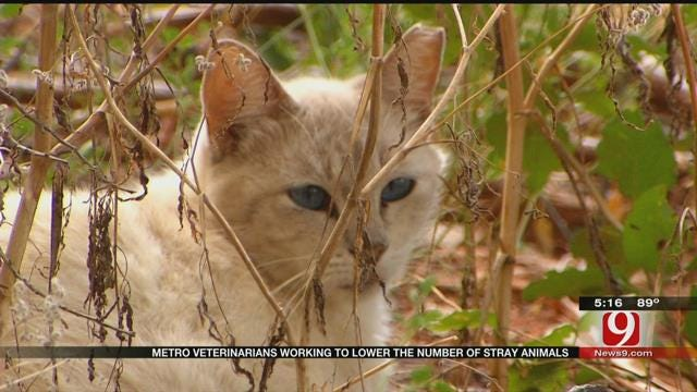Metro Veterinarians Working To Lower Number Of Stray Animals