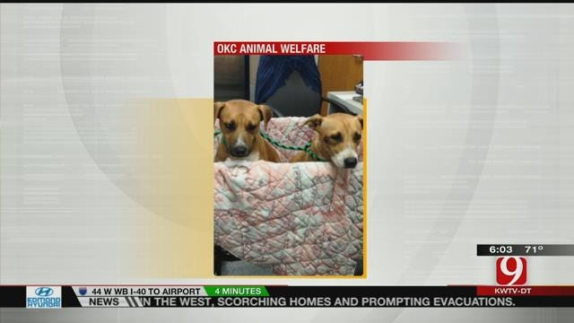 Authorities Investigate After Two Puppies Found Shot In OKC