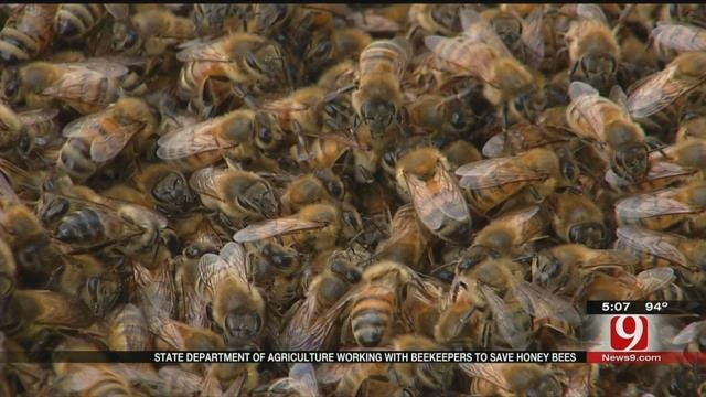 State Tries To Bring Bee Population Numbers Up