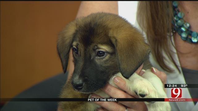 Pet Of The Week: Meet Ivy