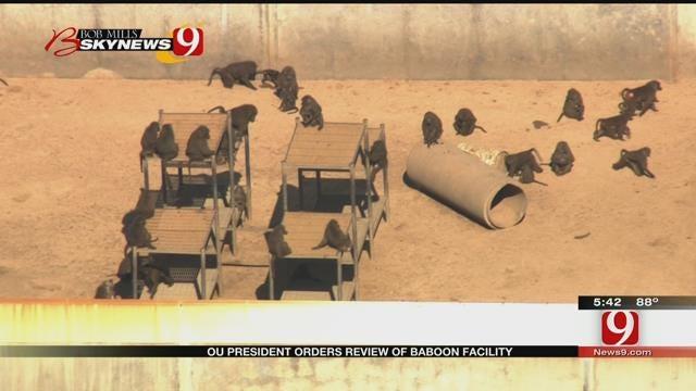 OU President Orders Review Of Baboon Breeding Program