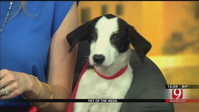 Pet Of The Week: Meet William
