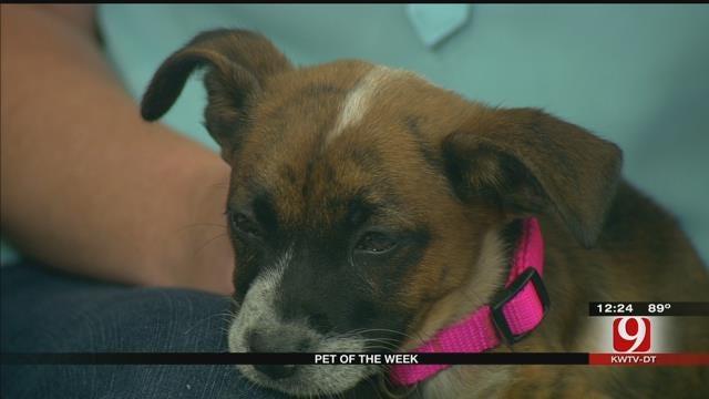 Pet Of The Week: Meet Nehi