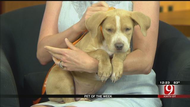 Pet Of The Week: Meet Nala