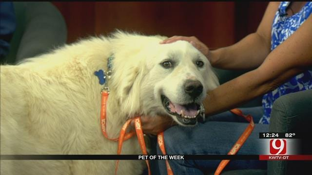 Pet Of The Week: Meet Olivia