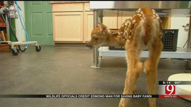 Wildlife Officials Credit Edmond Man For Saving Baby Fawn