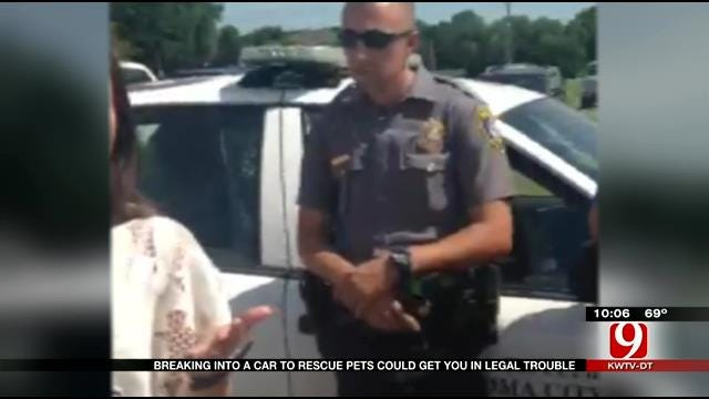 Dogs In A Hot Car Leads To Legal Lesson