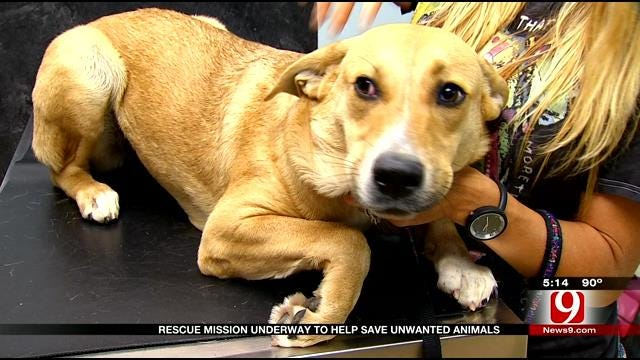 Animal Rescue Mission Sends Oklahoma Dogs, Cats To Colorado