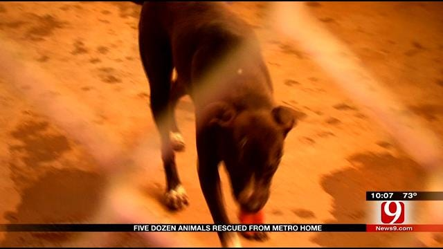 Nearly Five Dozen Animals Rescued From NW OKC Home