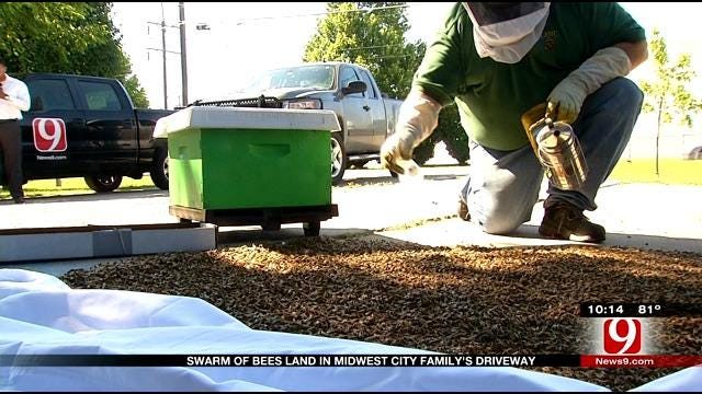 Swarm Of Bees Land In Midwest City Family's Driveway