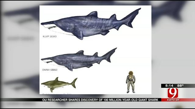 "OU Paleontologists Celebrate Discovery Ancient ""Jaws""-sized Shark"