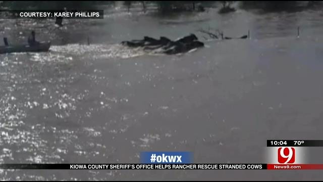 Kiowa Co. Crews Rescue Herd Of Cows From Drowning