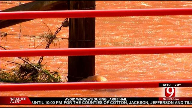 Cows Drown After Lake Thunderbird Flood Gates Opened