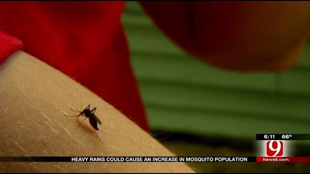 Precipitation Prompts Increase In Mosquito Population