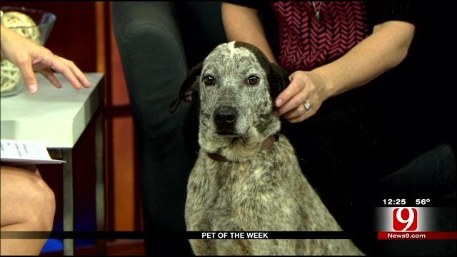Pet Of The Week: Meet Honey