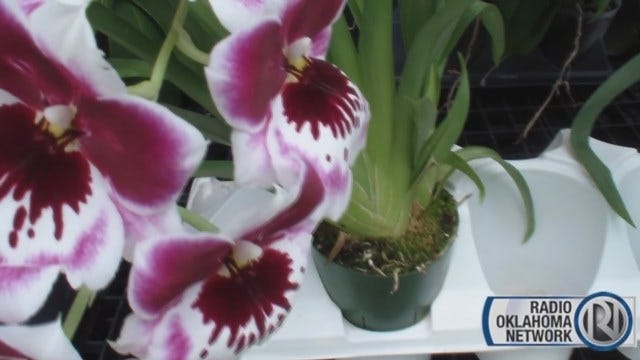 SW OKC Man Discusses Passion For Orchids