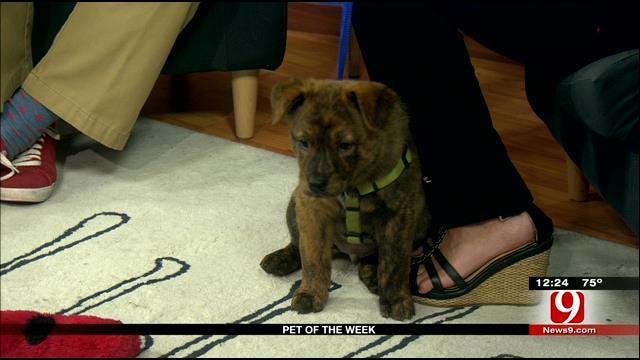 Pet Of The Week: Meet Stefon