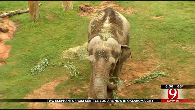 Seattle Elephants Finally Arrive In Oklahoma City