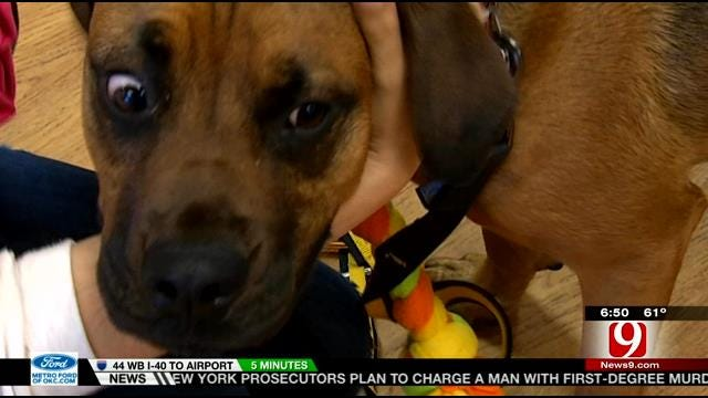 Doggy DNA Test Helps Owners Learn Their Dog's Background