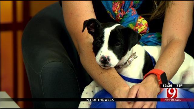 Pet Of The Week: Elsie