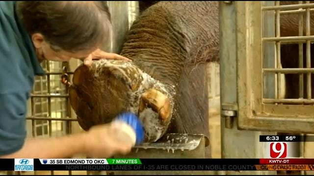 Critics Of Elephant Transfer Concerned After Tiger Scare At OKC Zoo