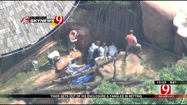 New Details Released In Tiger Enclosure Scare