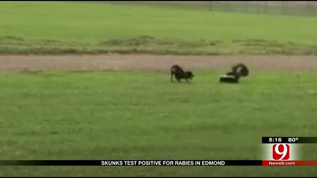Officials: Fourth Skunk Found In Edmond Tested Positive For Rabies
