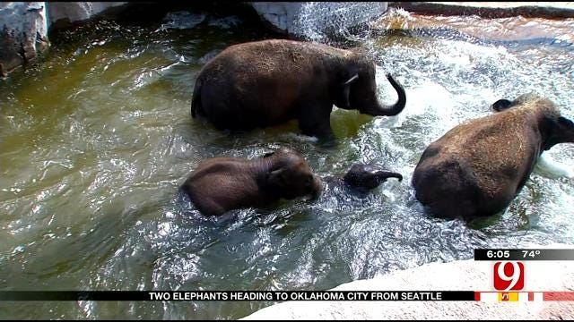 Two Elephants On The Move From Seattle To OKC Zoo