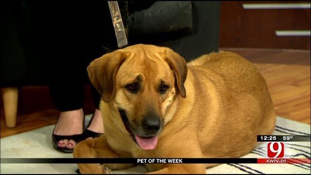 Pet Of Week: Meet Belle