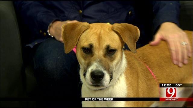 Pet Of Week: Meet Achilles