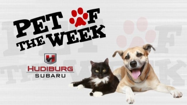 Hudiburg Pet Of The Week