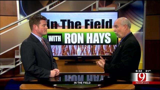 In The Field: Wheat Crop