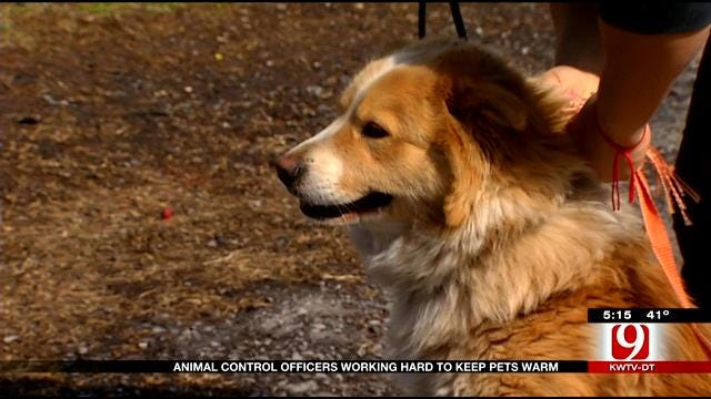 Work For OKC Animal Control Rises As Temperatures Fall