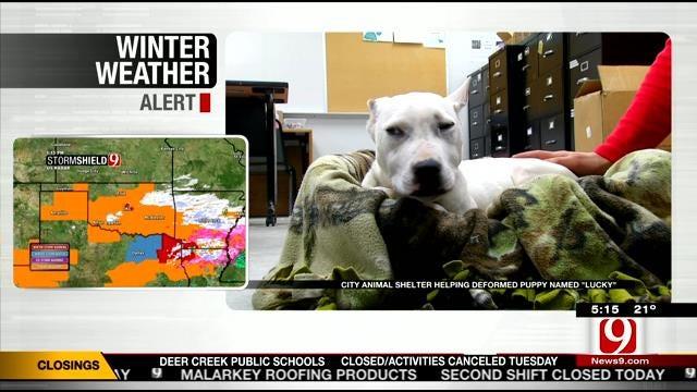 OKC Animal Shelter Raising Money For Dumped, Deformed Pup