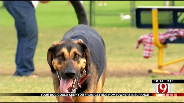 Oklahoma Pets Could Cause Problems For Owners, Insurance