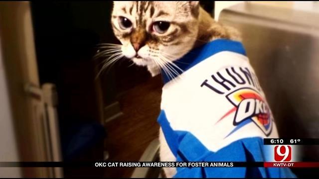 Red Dirt Diaries: OKC Cat Becomes Social Media Star