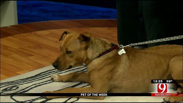 Pet Of The Week: Meet Elise