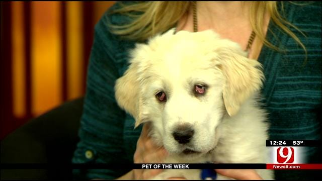Pet Of The Week: Meet Snow