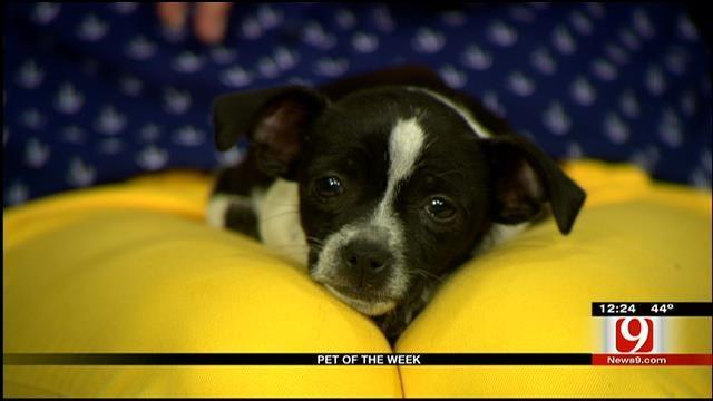 Pet Of The Week: Meet Flossy