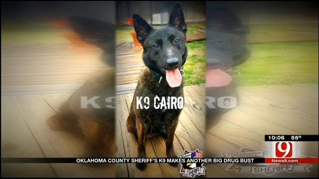 OCPD's K9 Cairo Sniffs Out Another Big Drug Bust