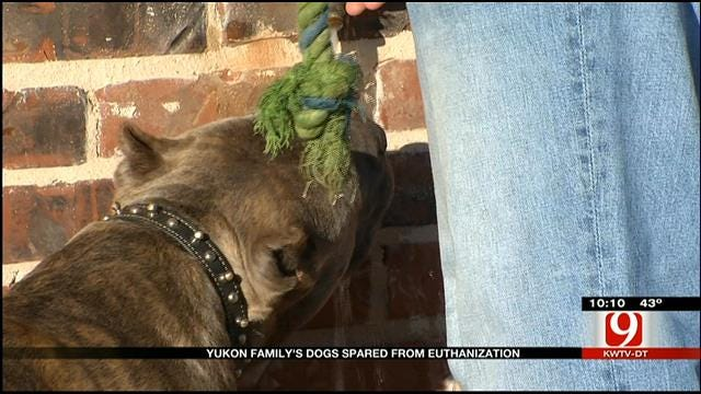 Cooler Heads Prevail In Yukon Dog Dispute Between Neighbors