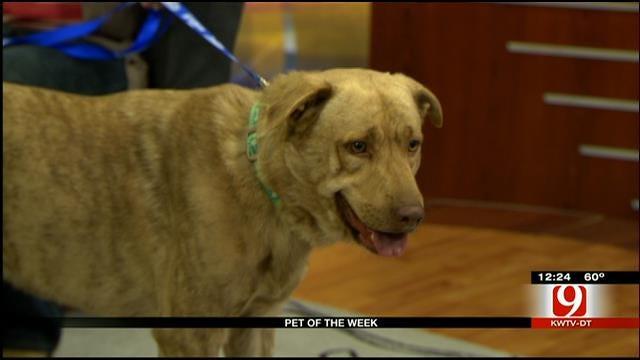 Pet Of The Week: Meet TJ