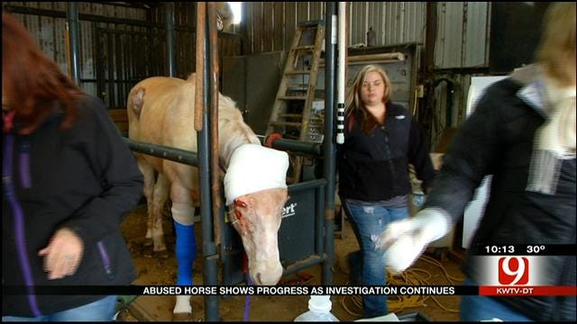 OKC Horse Left For Dead Now Making A Miraculous Recovery