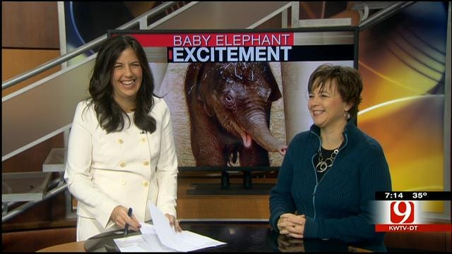 OKC Zoo: Baby Elephant