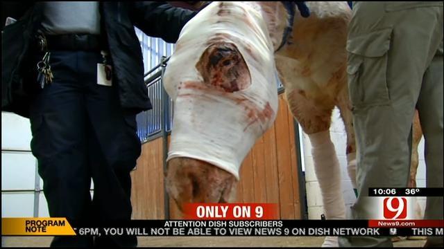 Nearly Dead Horse Rescued In OKC
