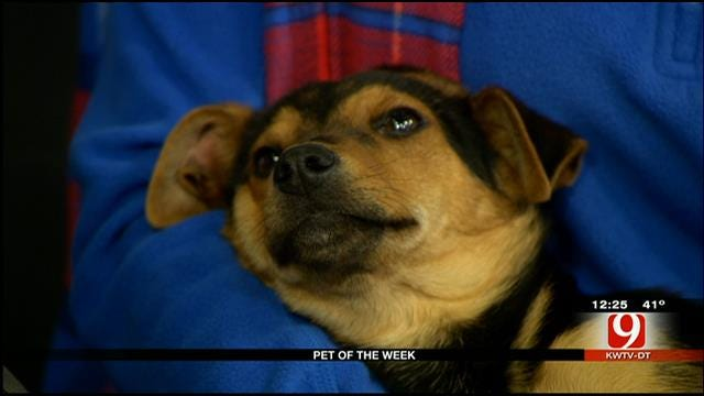 Pet Of The Week: Meet Doug