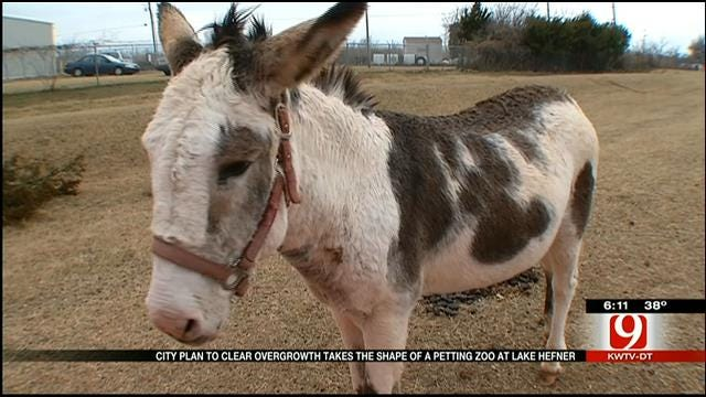 Red Dirt Diaries: Pin The Name On The Donkey